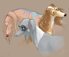saluki trio by shelzie