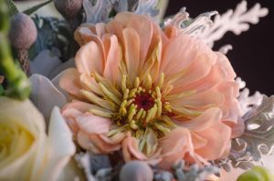 Peach Flower by Caitiekabob