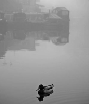 Lonesome Duck by photonig