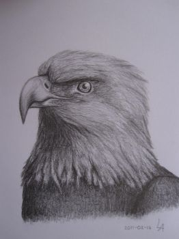 Eagle by nummerett
