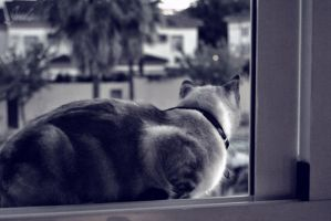 Cat almost outside by JulsBlack