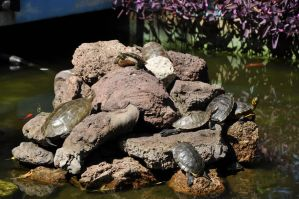 Turtles!!! by DrkHrs
