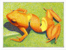 Mussett - Pointillism Orange Peel Frog (Remake) by Peppered-Oni