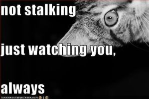 not stalking by InhailedAssassin