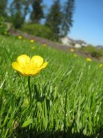 standing up buttercup by Lafire