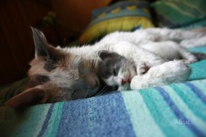 Kitten and Mom II by Milcaifloz