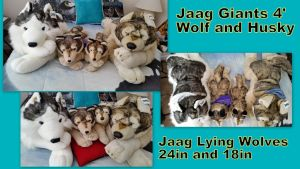 Jaag lying Wolves and husky by Vesperwolfy87