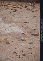Dried Ground with Rocks Preview by kuschelirmel-stock
