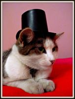 Cat in the hat by tere-fere-qq