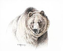 The Heavyweight - Grizzly Ink by CitizenOlek