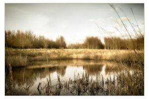 Another Pond by AndersStangl
