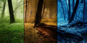 Forest of different seasons by Vreckovka