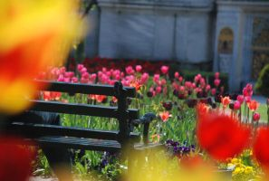 Romantic bench by r3code