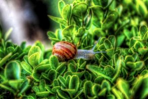 snail HDR by LucaDeBoa