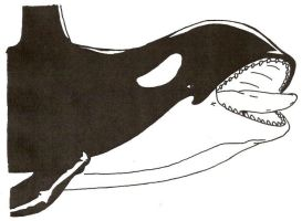 Orca Attacks with Jaws by Stonegate