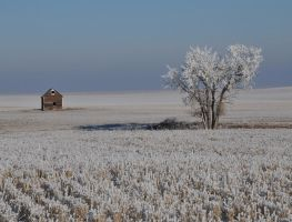 frosty tree and grain bin by Marvmitty