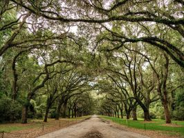 Wormsloe Plantation in Savannah, Georgia_3 by PhotoshopGirl29