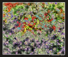 floral exuberance by bracketting94