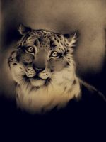 realistic snowleopard drawing by Honeycorn
