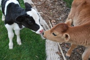 Hello There by ReporterXDos