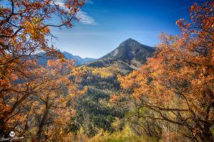 Yellow Aspens Through the Red Oak by mjohanson