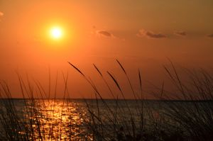 Reeds by the sea , summer sunset by AmmarkoV1