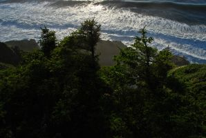 Forest Meets Ocean by yuvi2
