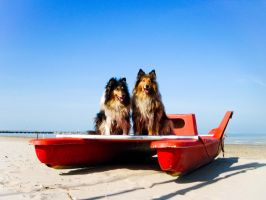 Dogs on the Boat by hermio