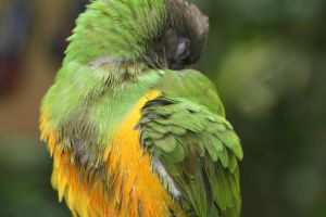 Magic Wings Parrot IV by Maeve09