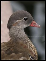 Import duck by Sophie1990