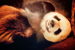 The Smiling Panda by AnthonyPresley