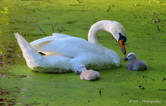 Mother and children with her favorite food by MT-Photografien
