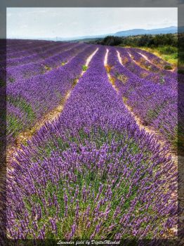 Lavender field... by digitalminded