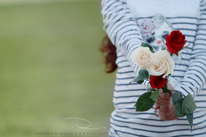 Rose by Ta3abeer