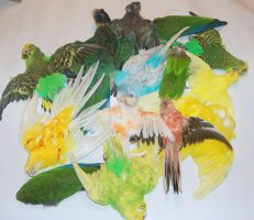 bird skins for sale by HippiUnicorn