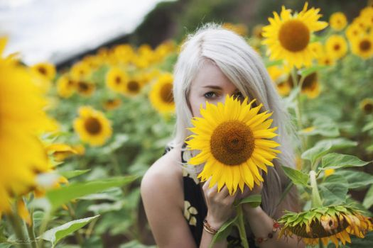 Tournesols by red-liight