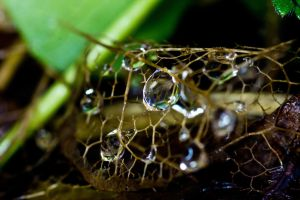 Dead leaf with water drops by YvdlArt