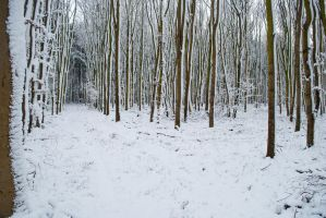 Snowscape Stock 66 by Sed-rah-Stock