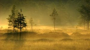 13.7.2010: Morning Gold by Suensyan