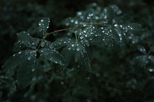 leaves last night's rain by EriOmIn