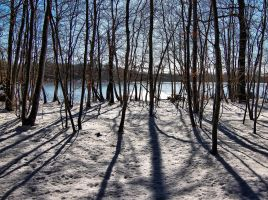 Trees and shadows by JoelRemy222