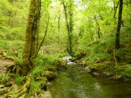 Lydford Gorge: View 149 by yaschaeffer
