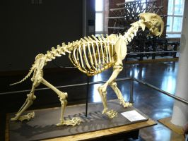 Prehistoric Cat by CatwomanofTheSouth