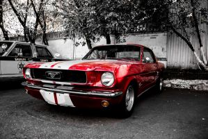 Mustang by Tes-Foto