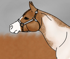 Simple Halter Entry (Mini) by Starcather9