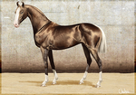 Altair, Akhal tekeXMarwari Stallion by BH-Stables