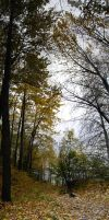 Forest Panorama 3 by prints-of-stock