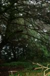 Tree Branches1 by Armathor-Stock