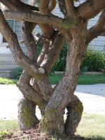 Braided Wood Tree Trunks by FantasyStock