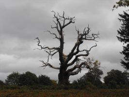 Old tree by kool007kat-stock
